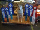 Peaches first agility Trial
